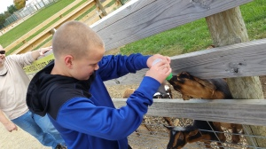 Judah feeding the baby goats at Eugster's