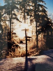nature's cross